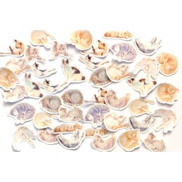 LOT DE 45 stickers autocollants en quadrichromie thêmeI love Cats