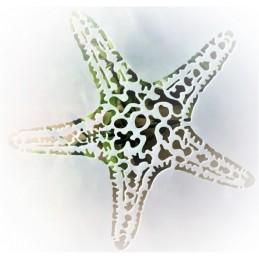 POCHOIR PLASTIQUE 13*13cm : etoile de mer (01)